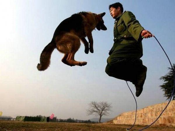 Saltar à corda