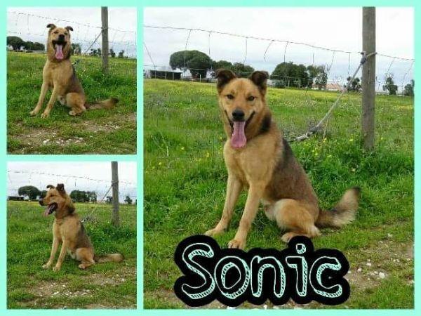 Foto Sonic
