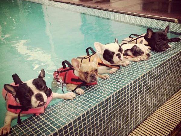 Meninos, hoje vamos aprender a nadar!