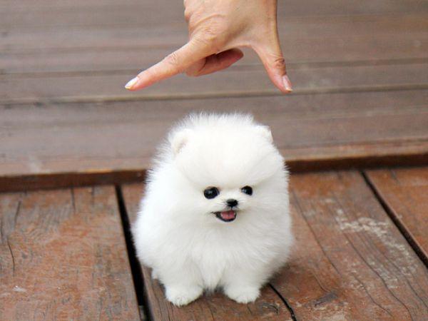 Quem dise que os cães não se medem aos palmos?