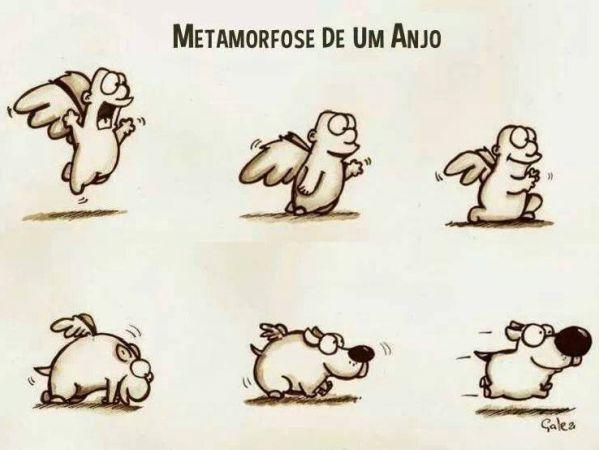 Metamorfose de um anojo
