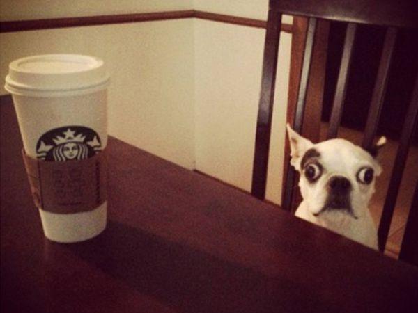 Cafeína a mais