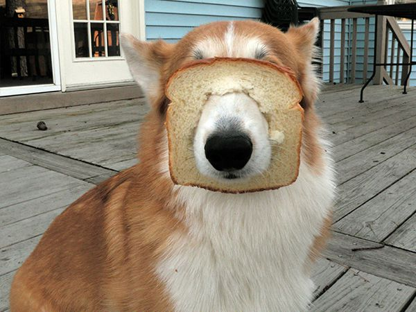 A única maneira de calar um cão é lhe dar pão!