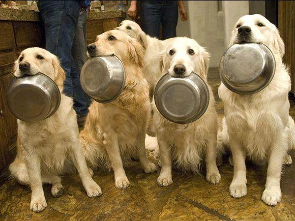 Queremos comer!
