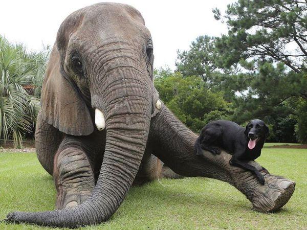 Parceria entre cão e elefante