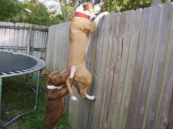 Então, consegues ver a vizinha?