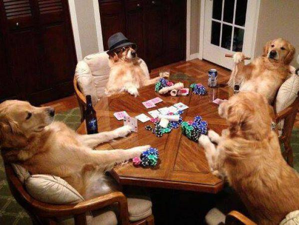 Noite de poker