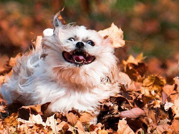O barulho das folhas dá-me cá uma pica!