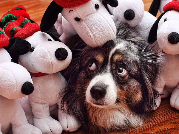 Invasão de Snoopies