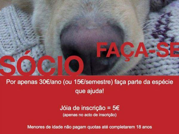 Foto Associação Projecto Animais de Barcelos