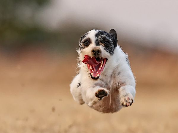 Super cão!