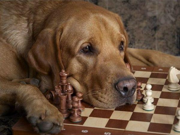 Xadrez não é jogo para mim