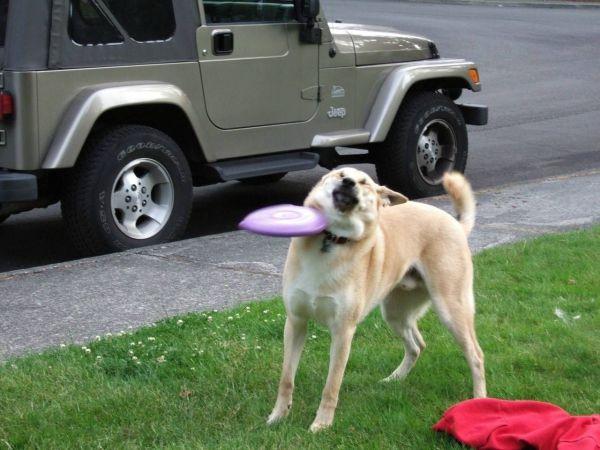 Frisbee às 6 horas da manhã