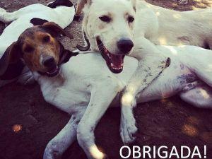 Foto filho Associação Projecto Animais de Barcelos