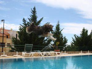Os cães voam!