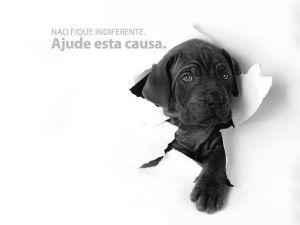 Foto filho ALAAR - Associação Limiana dos Amigos dos Animais de Rua