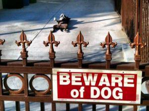 Ou comprei a placa errada ou comprei o cão errado!