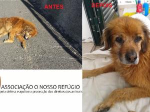 BELO - Foi resgatado -  Precisa de FAT ou Família de Adopção - URGENTE
