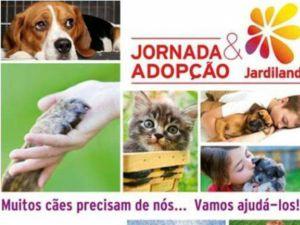 Foto Campanha Jornada de Adopção