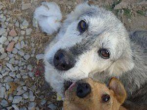 Foto filho Associação dos Amigos dos Animais Abandonados da Moita
