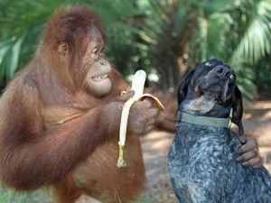 Vai uma banana?