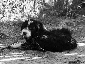 Humphrey Bogart de Aradik - 09 semanas