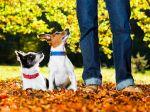 5 frases que os donos de cães não devem dizer (PARTE 1)