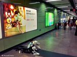 China ONG lança campanha contra consumo de carne de cão