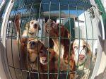 Animais da APA são vítimas de assalto e maus-tratos