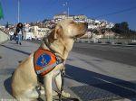 Primeiro cão-guia formado em Portugal entregue há 15 anos