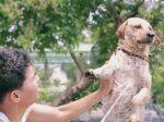Homem dedica-se a dar banho a cães de rua