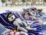 Proteja o seu cão do sol
