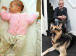 Cão salva recém-nascida abandonada