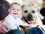 Cães de luta passam mensagem de esperança