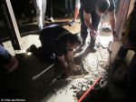 Bombeiros de Odivelas resgatam cão de esgoto