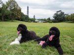 Mais um Cão de Água Português na Casa Branca