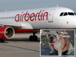 Air Berlin paga indemnização pela morte de um cão
