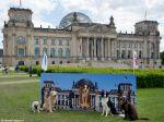 Cães no trabalho aumentam a produtividade alemã