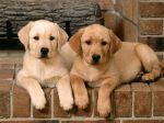 Adquirir dois cachorros de uma só vez?