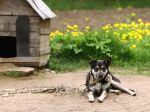 A história de um cão acorrentado