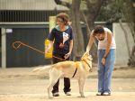 Cães e os seus donos invisíveis