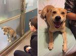 Fotografias antes e depois da adopção