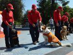 Cães outrora abandonados são agora guardiões da cidade