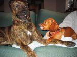 Linguagem corporal dos cães