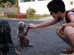Criança trata de cães abandonados