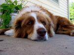 Pequenos sinais de doença no seu cão
