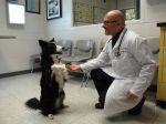 Comportamentalista revela 5 mitos caninos