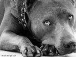 Elle, a Heroína Canina de 2013