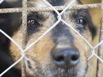 Portugal irá por fim aos canis de abate