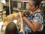 Câmara de Sintra quer travar abandono de animais